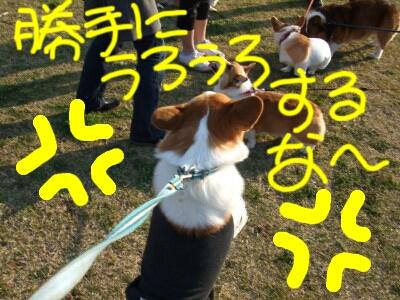 DSCF5886_1_1.JPG