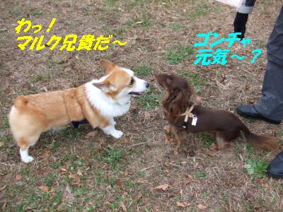 DSCF0136_2.jpg