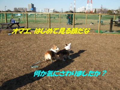 DSCF0918_2.JPG