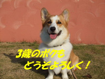DSCF2741_2.JPG