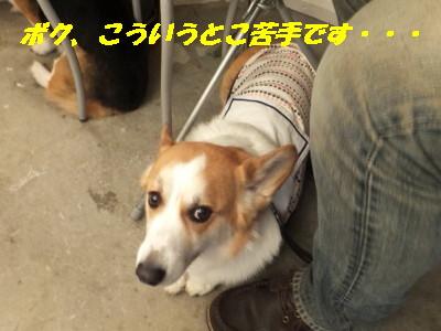 DSCF6146_2.jpg