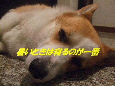 DSCF9786_2.JPG